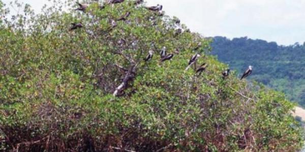 En Chone, en la Isla Corazón y Fragatas, iniciará plan de recuperación forestal. Foto: Ministerio del Ambiente